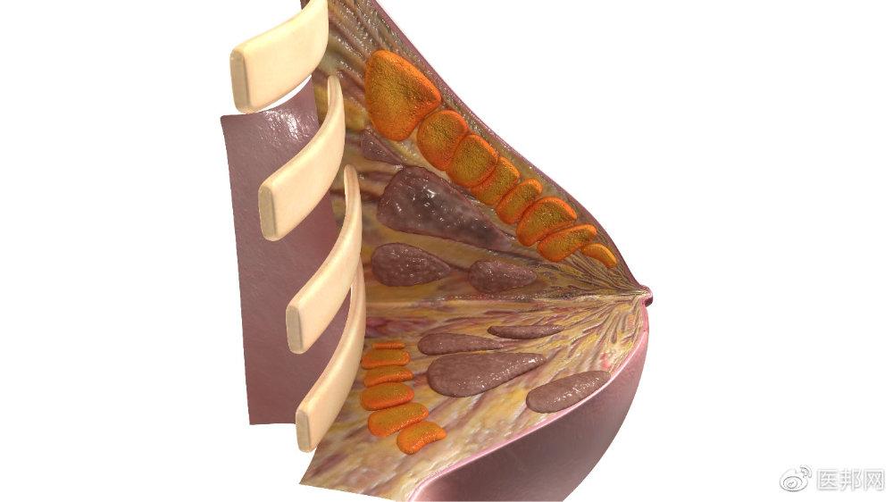 为什么女性容易乳腺增生?乳腺增生与乳腺癌有关系吗?真相在这里