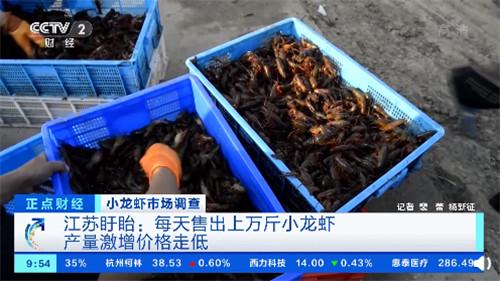 小龙虾一斤降价十几元,养殖户:养小龙虾年赚三十万