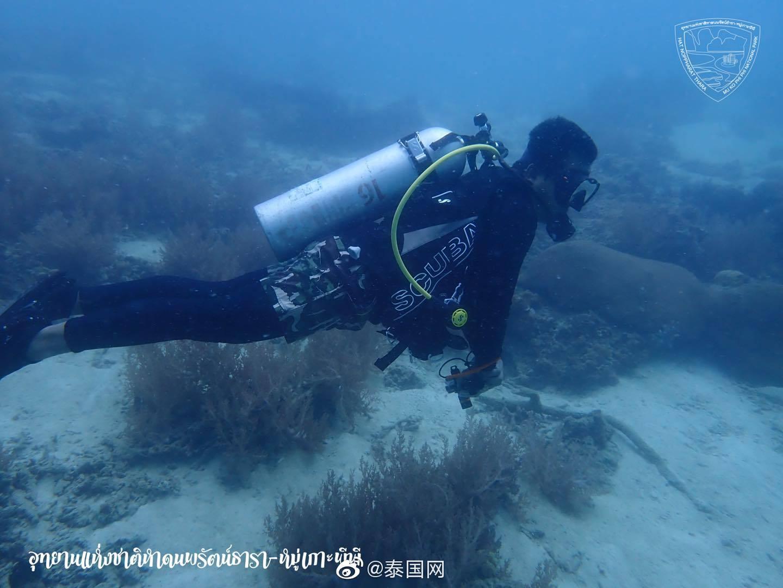 疫情助海洋生态复苏,泰国皮皮岛珊瑚恢复良好