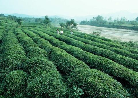 河南省南阳市桐柏县:土地整理绿了 荒山