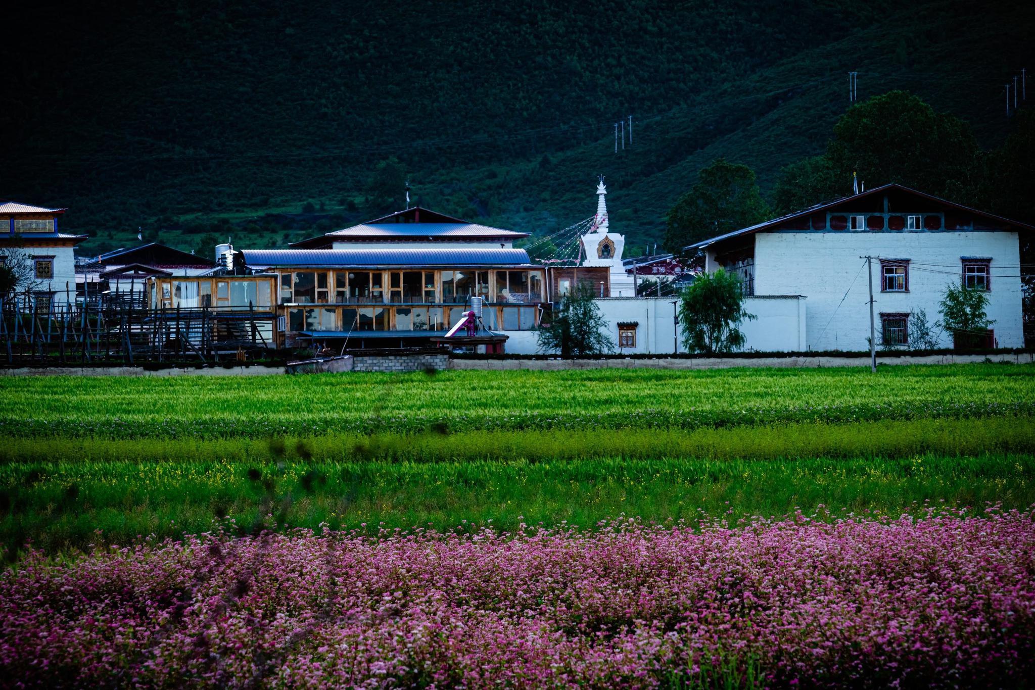 纳帕海,夏秋时节,湖面广大,水草丰美,牛羊成群,水天一色