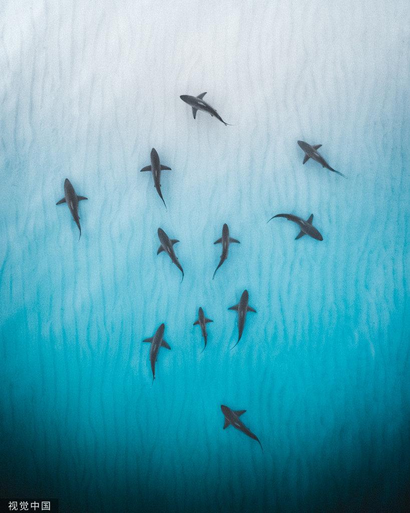 澳大利亚西海岸,海岸线附近清澈浅水里的刺鳐和鲨鱼