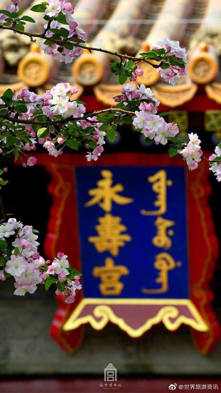 最美人间四月天!紫禁花开,春意盎然!一起来欣赏故宫的春色吧!