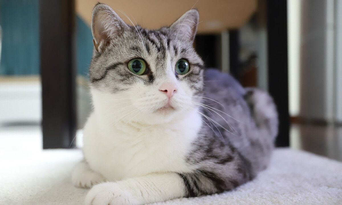 猫咪会认识自己的妈妈?兄弟吗?