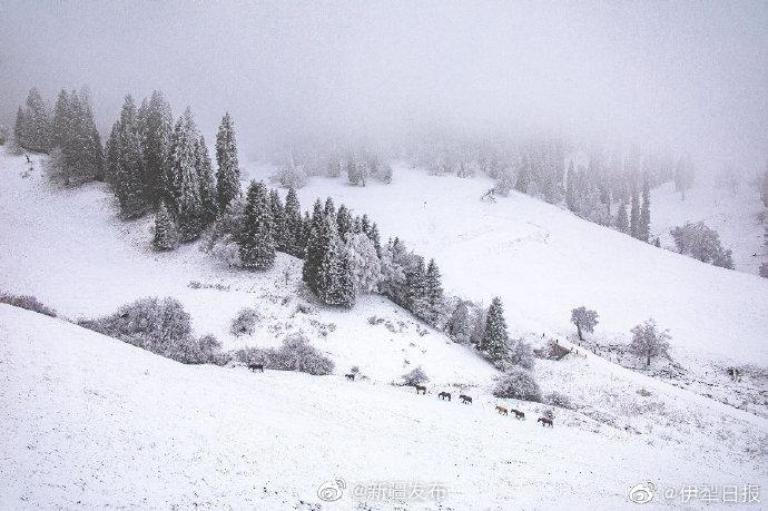 水墨那拉提:诗意冬雪