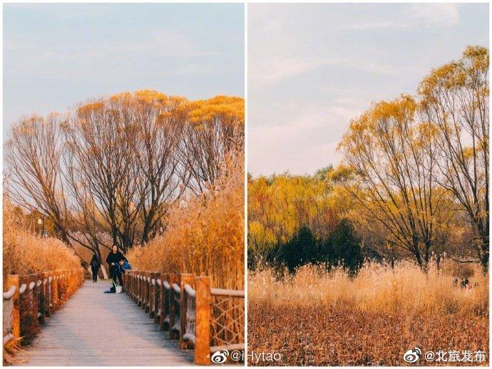 初冬的奥林匹克森林公园@文旅北京 @iHytao