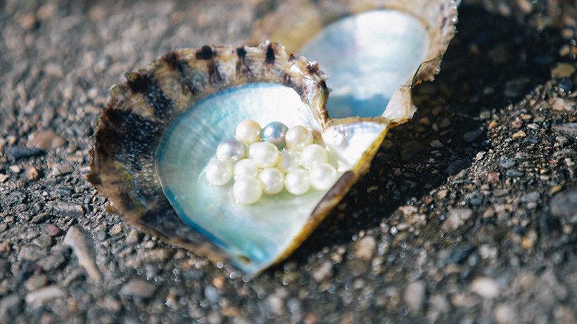 自然力量与人类智慧的结晶——伊势志摩的珍珠养殖
