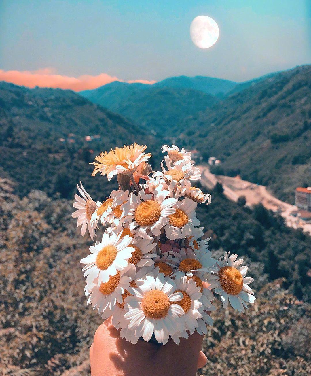 送你一束秋日的小雏菊。