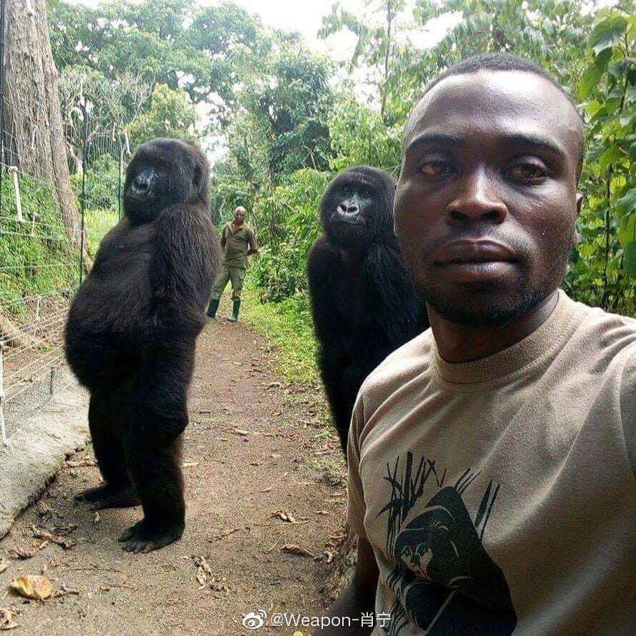 还记得那张反盗猎队员马蒂厄·沙马武(Mathieu Shamavu )与大猩猩的