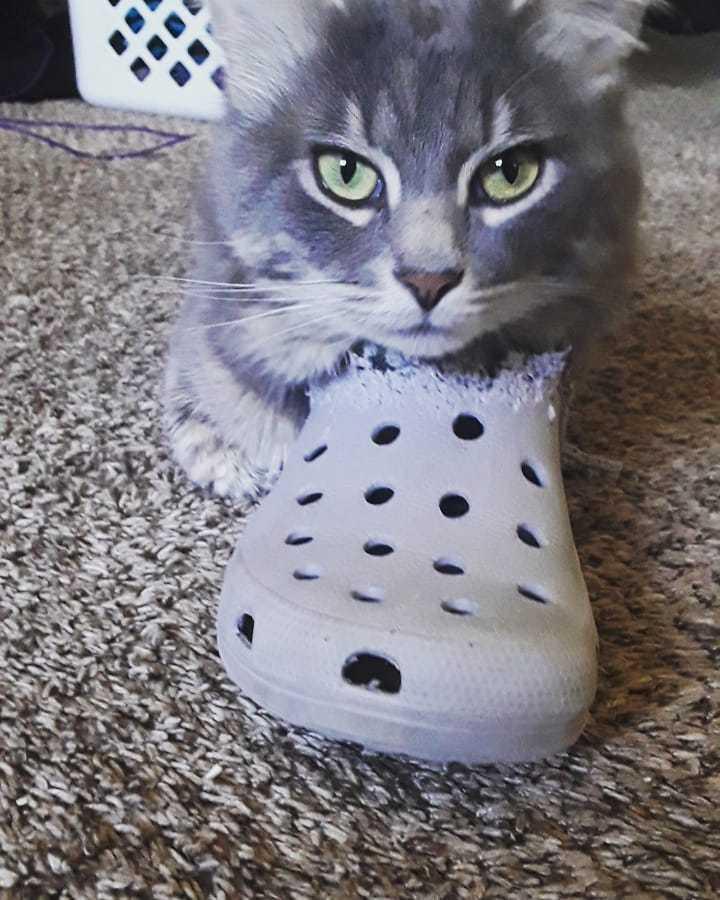 几年前,猫咪开始啃这只鞋,现在变成这样了...Ins