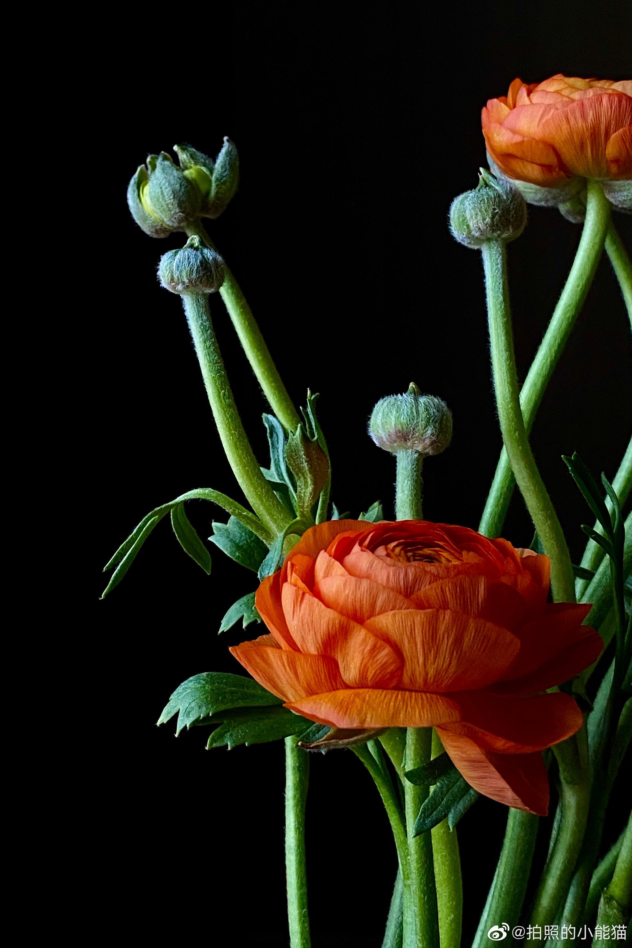 光线找的好,暗调没烦恼手机徒手拍暗调花花,为展示直接拍摄效果