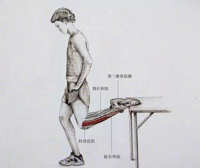 小腿粗又硬?送你最全面最清晰的小腿拉伸大法!