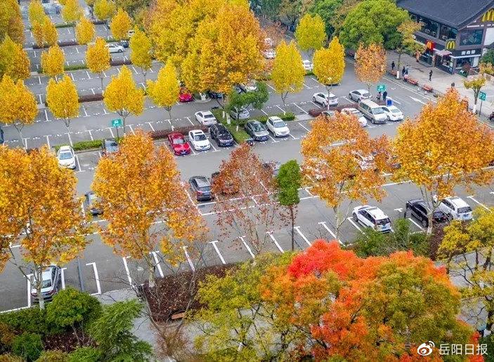 岳阳主城区临街机构、事业单位停车场对