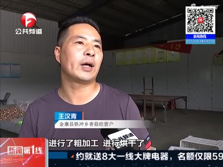 《新闻第一线》金寨:大山村里开直播  香菇有了新出路