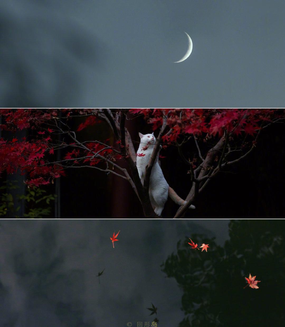 春游牛首,秋游栖霞。再过两个月,南京的栖霞山,枫叶红透漫山遍野