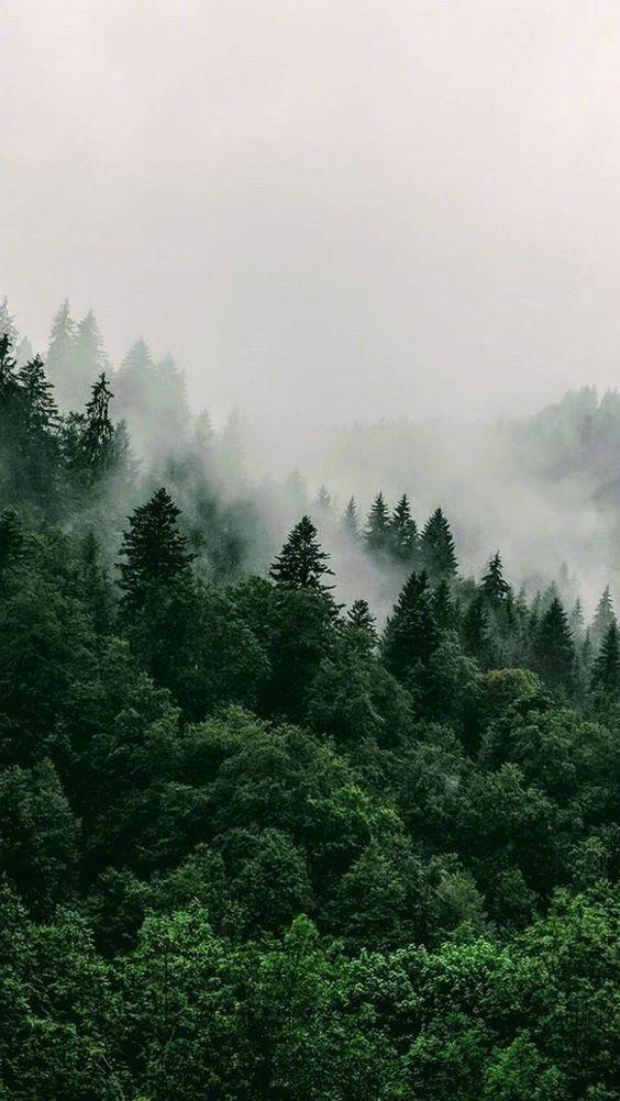 """""""穿过雾霭森林去拥抱你"""""""