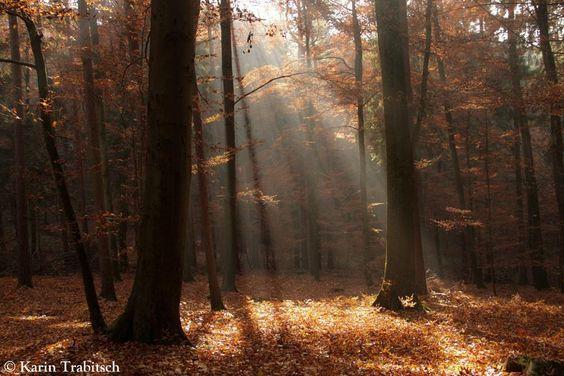 绘画素材 森林与光