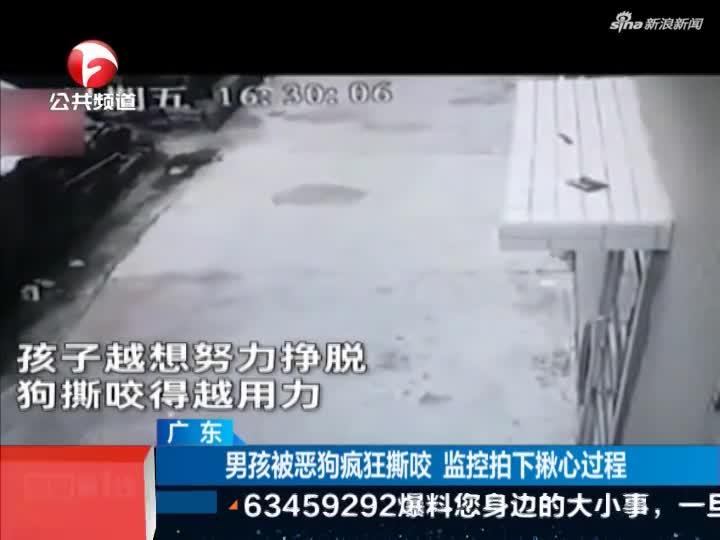 《新闻第一线》广东:男孩被恶狗疯狂撕咬  监控拍下揪心过程