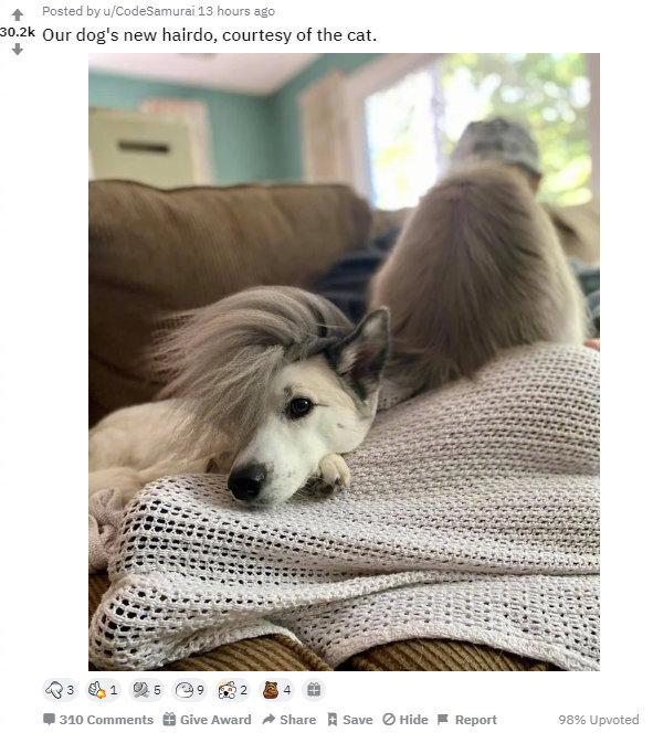 狗狗的新发型,由猫咪提供还挺帅气!by/reddit/CodeSamurai