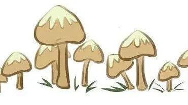 本市常见的这6种野生毒蘑菇切勿采摘、食用!