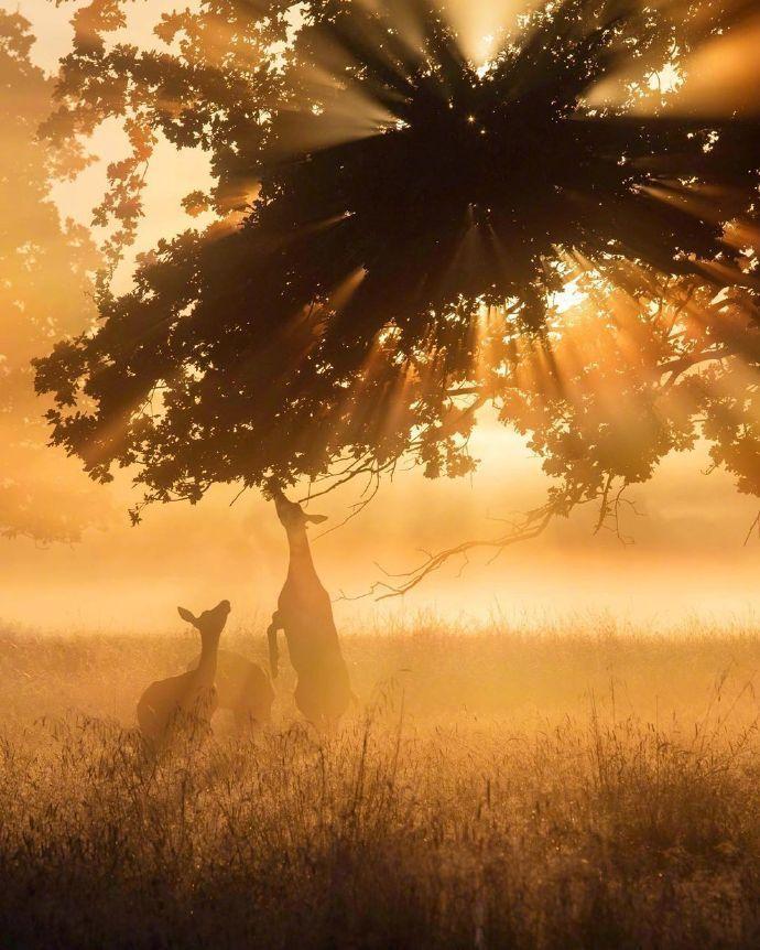 一个人彻悟的程度,恰等于他所受痛苦的深度。——林语堂