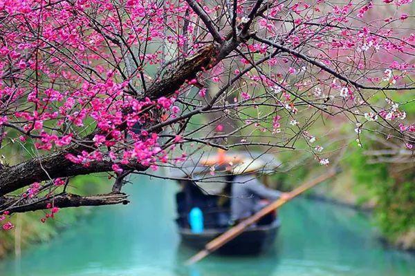 浙江杭州,除了西湖的美景,西溪湿地也是一个传说中的网红打卡胜地
