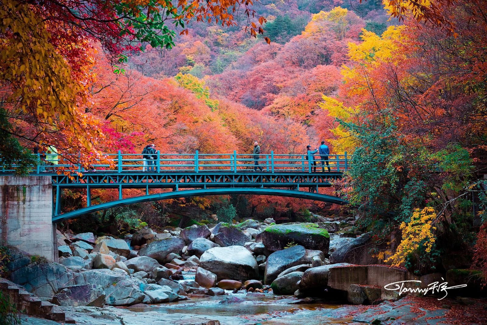 人间忽晚,山河已秋。(四川,光雾山) @微博摄影