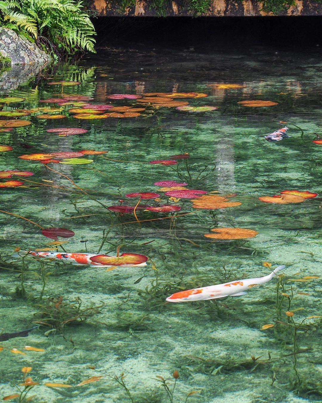 日本岐阜的根道神社有一座无名池塘
