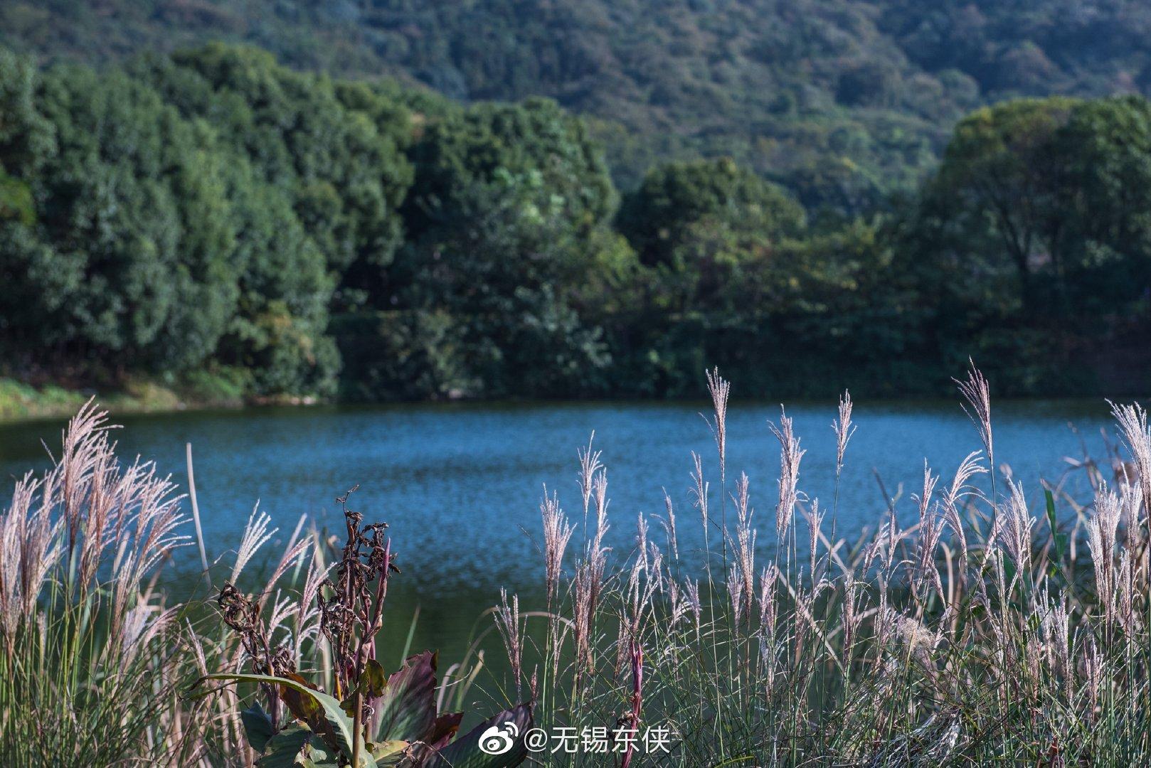 """胡埭藏着一条""""状元古道""""!新晋徒步旅游路线!起点为张野村"""