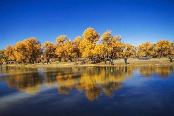 新疆的胡杨,漫天金黄,给无比辽阔的大地增添了一丝生机勃勃。