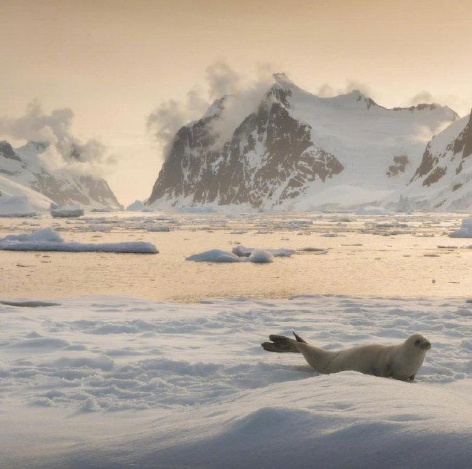 南极洲的春天