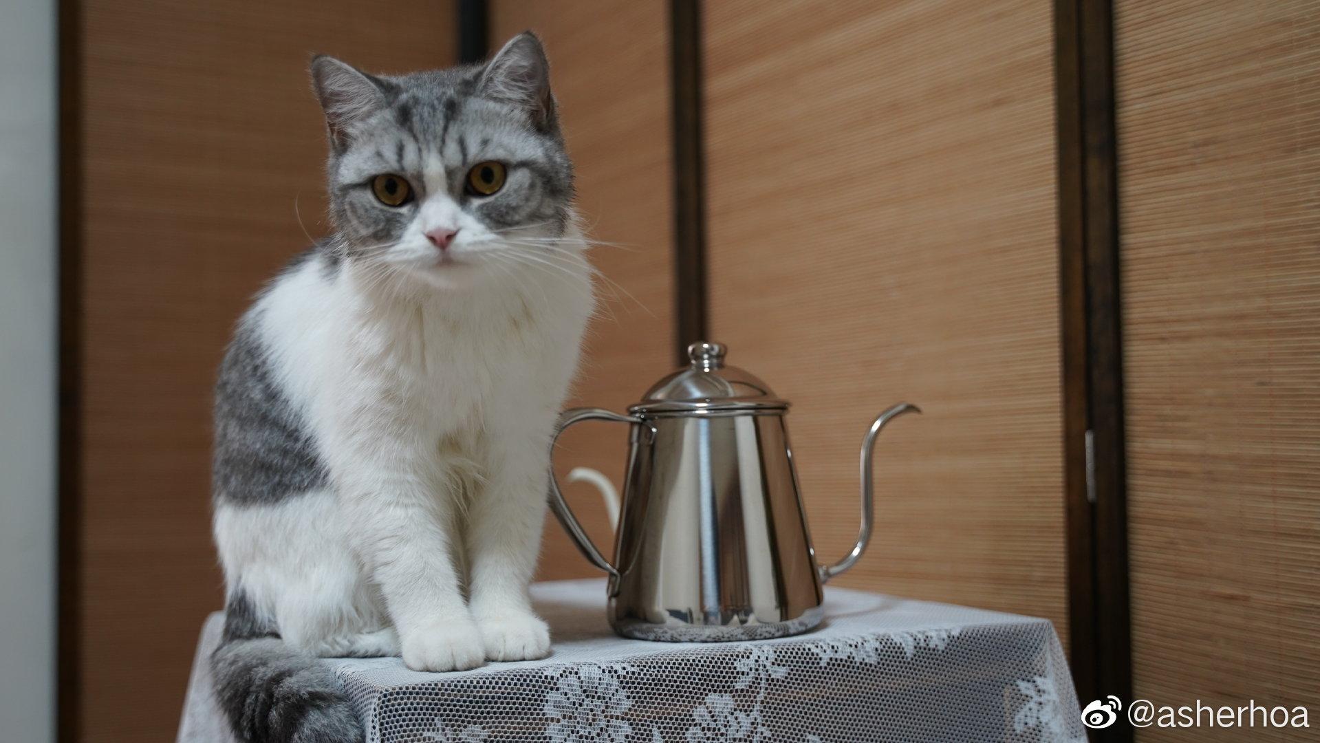 猫主子给咖啡作弊壶开光了。takahiro雫壶手感真是一流,颜值在线