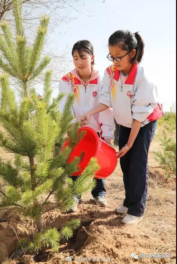 种树添绿!鄂尔多斯2020年计划义务植树800万株