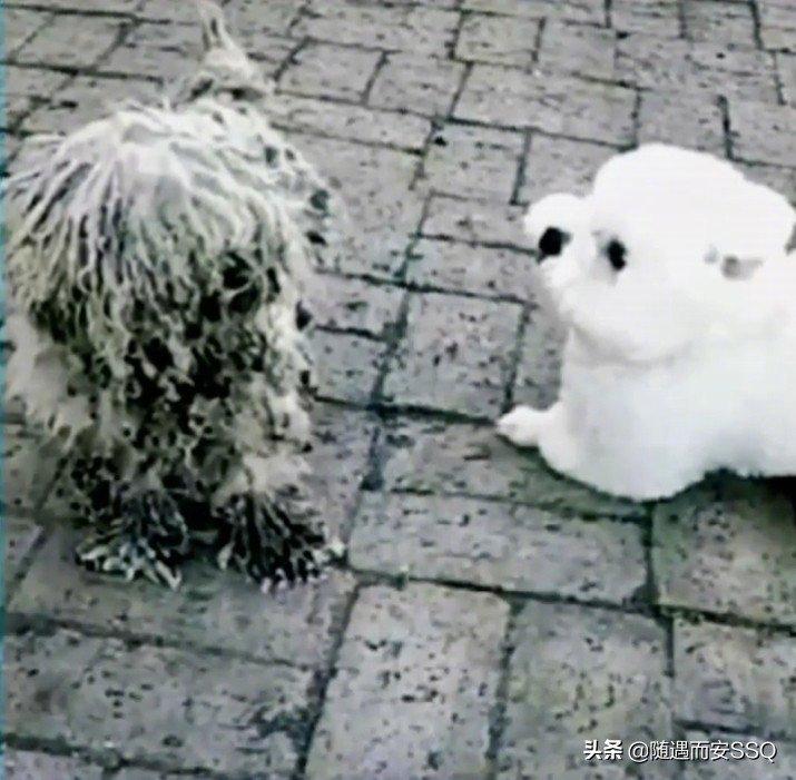流浪的小狗半年前被好心人收养,半年后遇到了依然在流浪的妈妈……