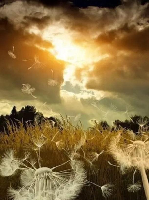 拥有一颗感恩的心,就是拥有一个和平的种子,播种到众生之中