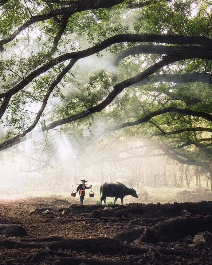 福建霞浦杨家溪的古榕树群,这意境太美了。