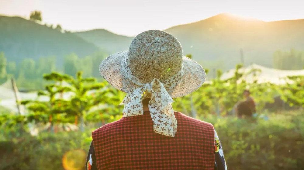 乡村振兴的超级样本:自动化养猪,棉花数字溯源,智能监护马铃薯种植