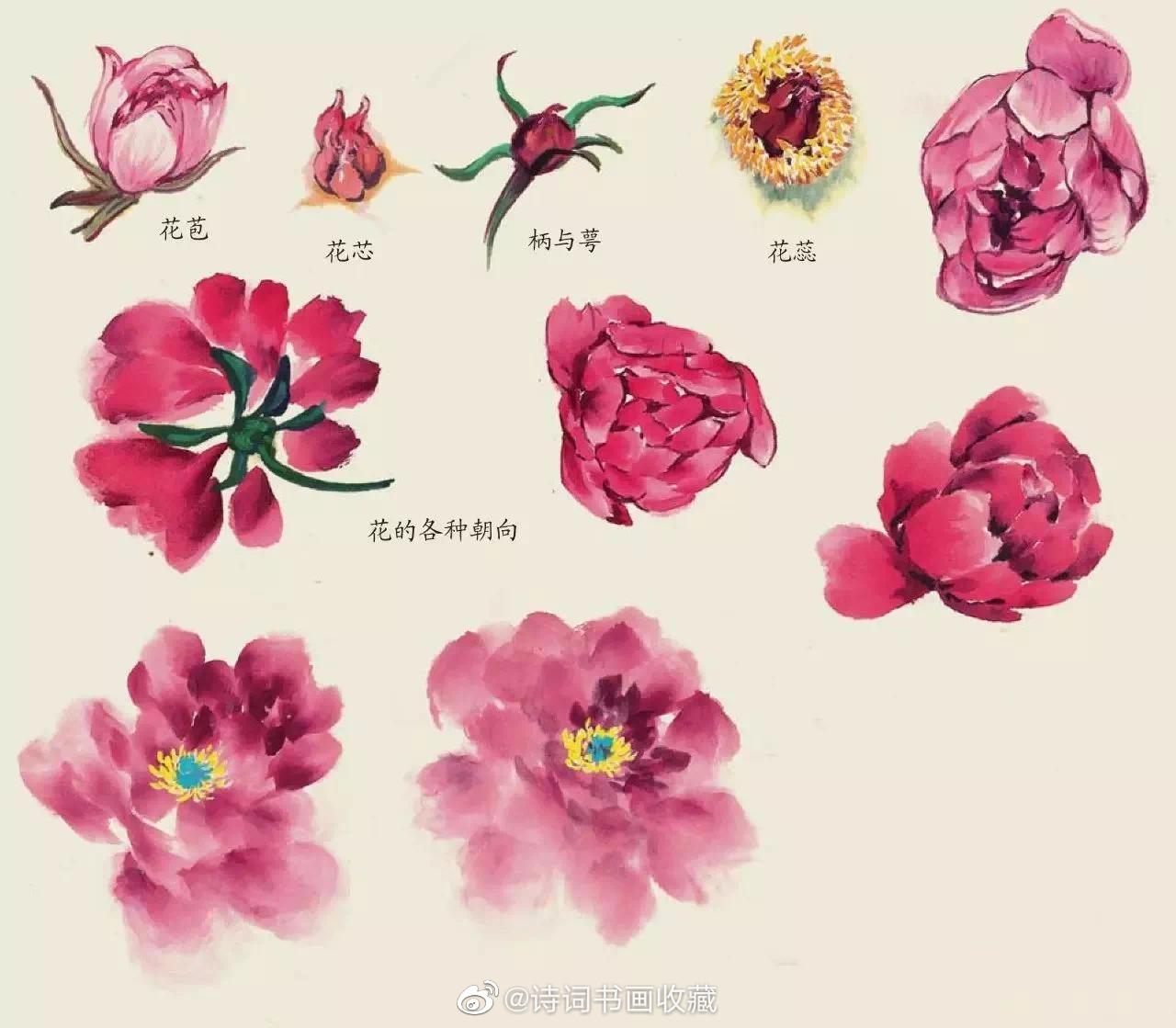 几种花卉的写意画法