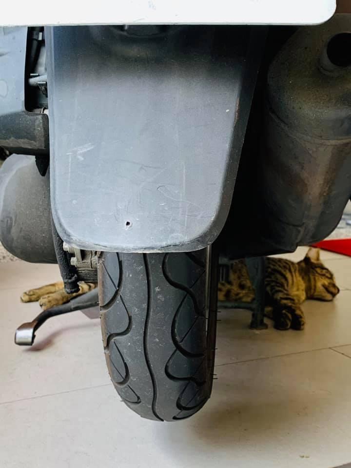 网友:请问遇到疑似假车祸的猫咪怎么办,已拍照.....by/FB/孟玲