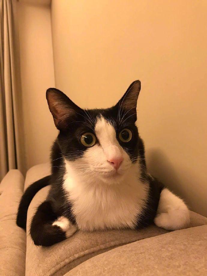 猫咪不会叠手手,双手插腋下的样子好像在生气哈哈哈哈