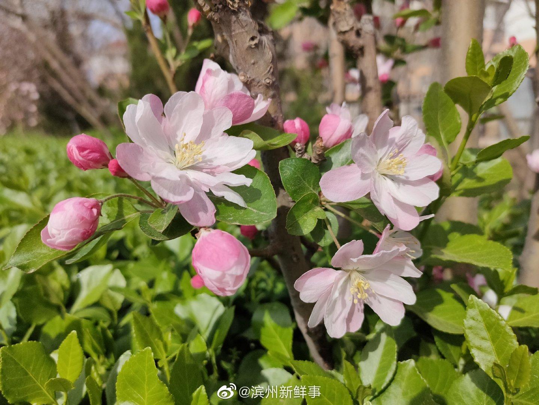 小区里春天盛开的花