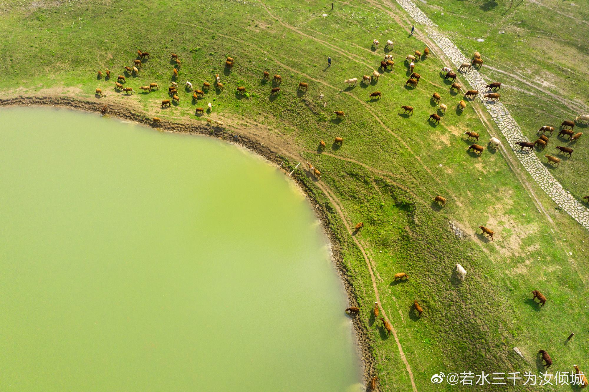 云贵高原上的草原——黔西南放马坪
