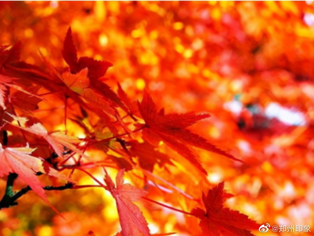 洛阳新安荆紫仙山满山红叶,正式进入最佳观赏期