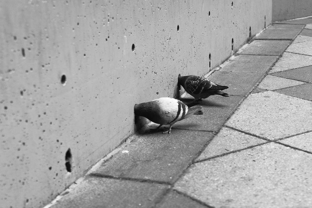 决定性的瞬间   Eric Kogan有趣的摄影作品