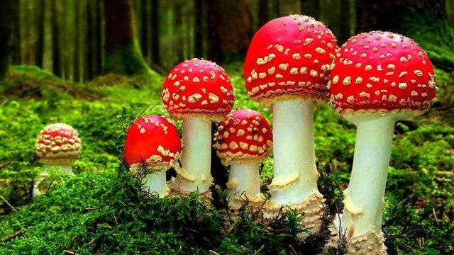 世界最早陆生真菌类化石在我国贵州发现,是蘑菇、酵母的祖先