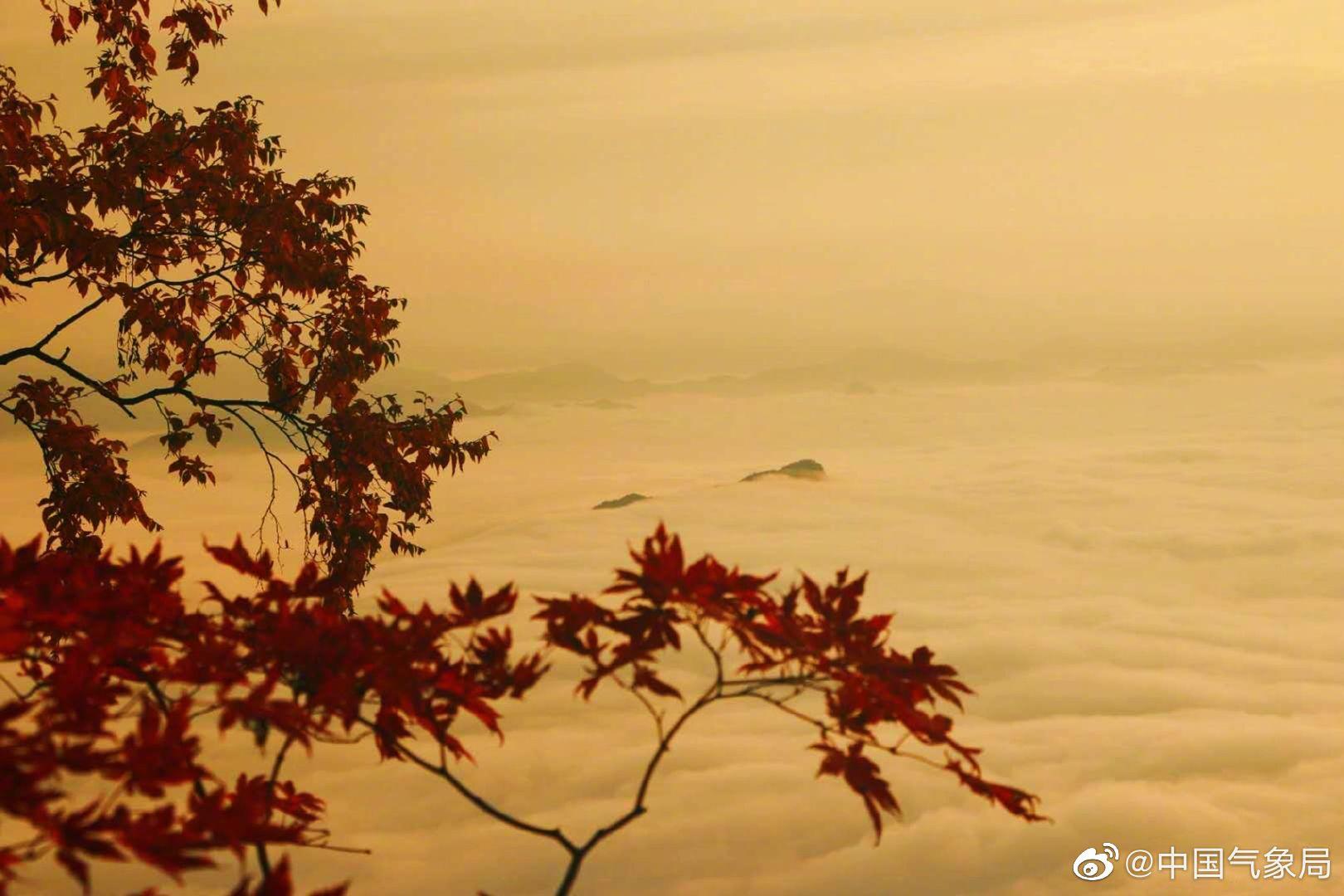 秋日的清晨,大雾穿越山间形成云海,霜染红叶越发红艳
