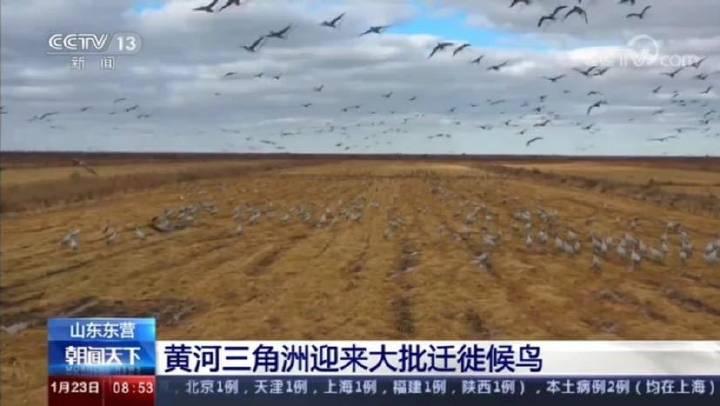 黄河三角洲迎来大批迁徙候鸟,东营又双叒叕上央视!