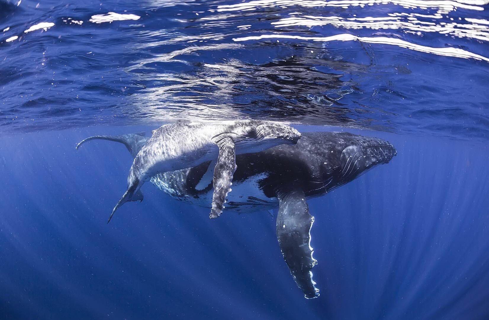 不恐怖不恐怖不恐怖大海超级美好,送你一片深蓝~