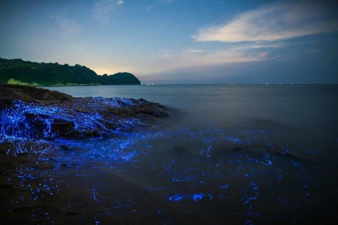 """本州岛西南部海湾海萤聚集地有独特的""""蓝眼泪""""Good night ☽"""