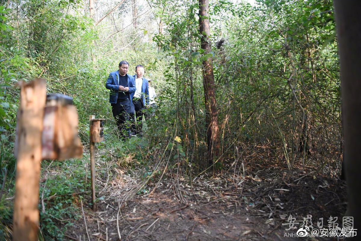 近年来,安徽扬子鳄国家级自然保护区加强野生扬子鳄保护